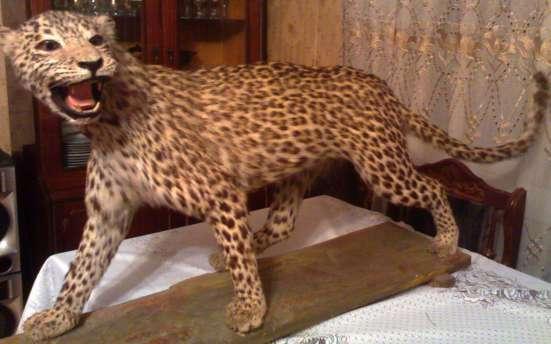 Kavkazki Leopard