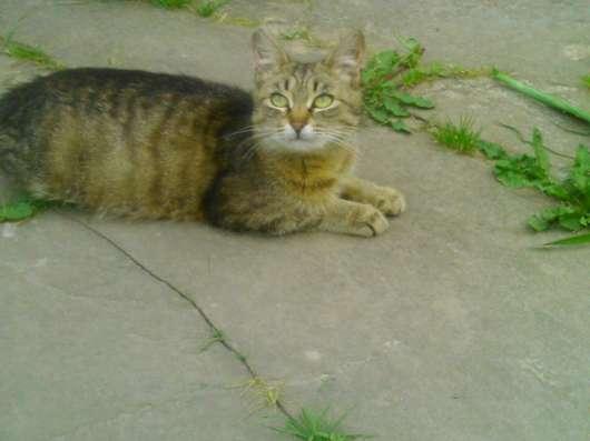 Трёхцветный котёнок ищёт хозяина в Москве Фото 1