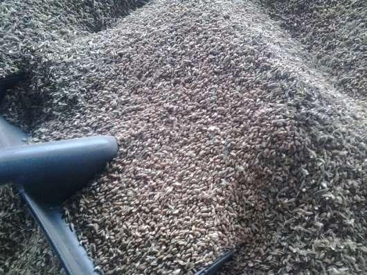 Пшеница фуражная фасованная по 50 кг в Омске Фото 1