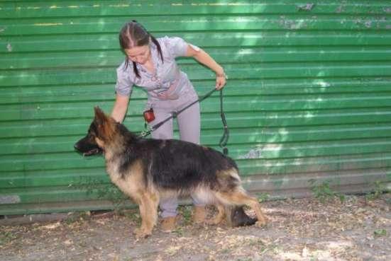 Услуги хендлинга в Ростове/Таганроге Фото 3
