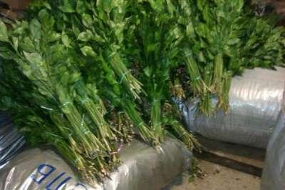 Рускус дешевле цены Краснодарского опта в Набережных Челнах Фото 2