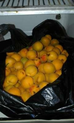 Продаются абрикосы