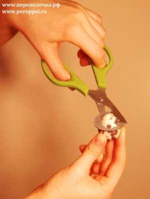 Ножницы для перепелиных яиц