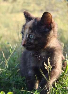 Отдам в хорошие, добрые руки котенка - кошку