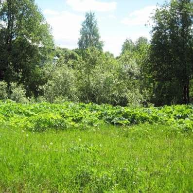 Земельный участок 10 соток ИЖС в поселке Цвелодубово