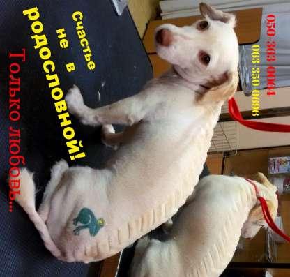 Профессиональные шампуни для собак и кошек KELCO в расфасовк