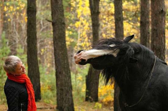 Фотосессия с лошадьми! в Красноярске Фото 4