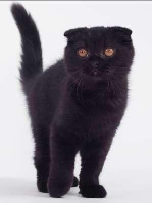 Супер котята