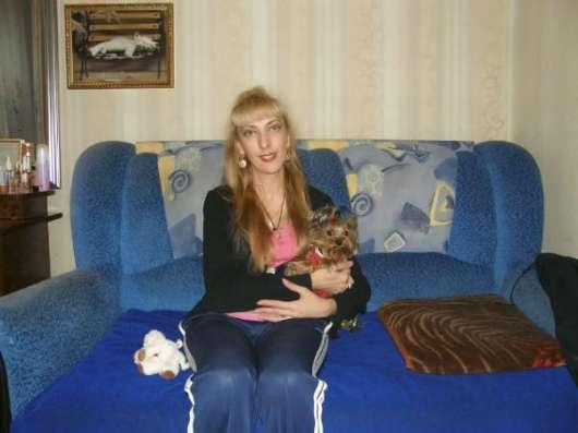 Красивые щенки йорка мини и мелкий стандарт чистокровные в Нижнем Новгороде Фото 2