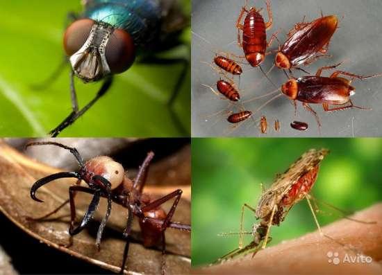 Уничтожение клещей, комаров и прочих насекомых