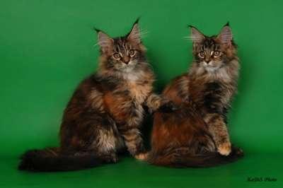Кошки и котята в Москве Фото 1