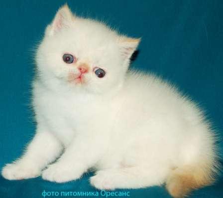 Экзотический котик (солнечный зайчик)