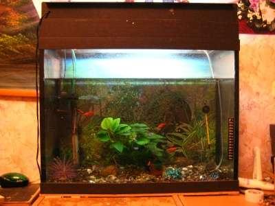 СРОЧНО !!! 2 аквариума действующих в Москве Фото 3