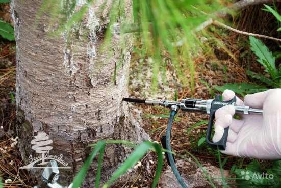 Лечение любых садово-парковых растений, Микро-инъекции в Сочи Фото 5