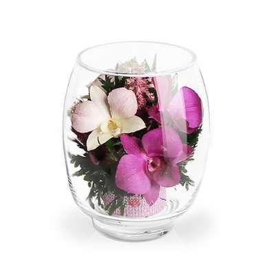 Орхидеи фиолетовые светлые
