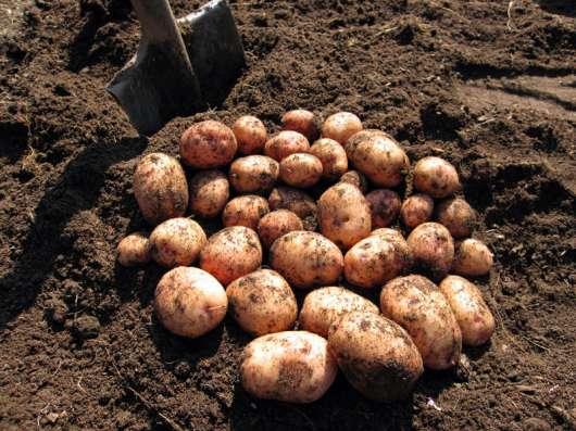 Продукты питания со своего огорода