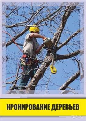 Удаление деревьев любой сложности в Воронеже Фото 3